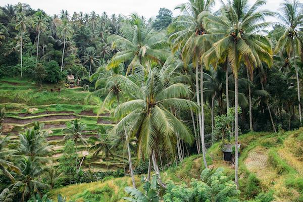 Tegallalang Rice Terraces Read more at: http://choosingchia.com//www.bali-indonesia.com/ubud/tegallalang-rice-terraces.htm?cid=ch:OTH:001